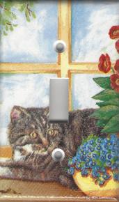 Silver/Grey Tabby Cat Sunning in the Window