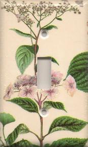 Light Pink Hydrangea - Single Switch