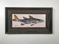 "Swimming Snook Framed Artwork 12 x 19"""