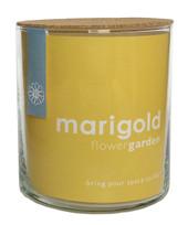 Marigold Flower Garden