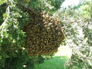 Swarm of bees on tree