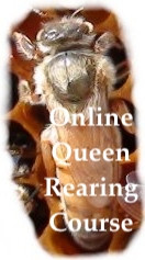 Online Queen Rearing Course- ONLINE ONLY + 1 Free Month Of Beekeeping Coaching .