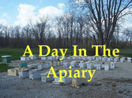 A Day In The Apiary Course- ONLINE ONLY