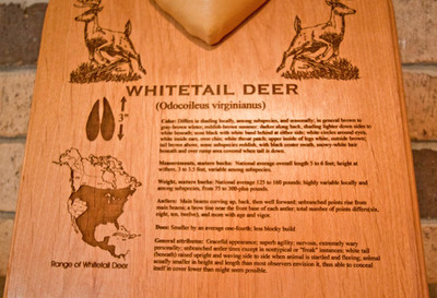 Story of the Hunt Plaque