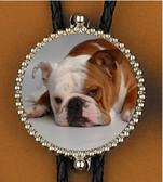 Bulldog Bolo tie