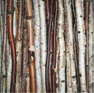 Birch Stick Pack (set of 3)