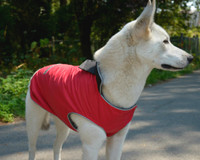 Waterproof Full Coverage Dog Coat