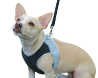 High Reflective Visibility Entire Top of Harness