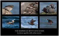 Barnegat Jetty Site Guide