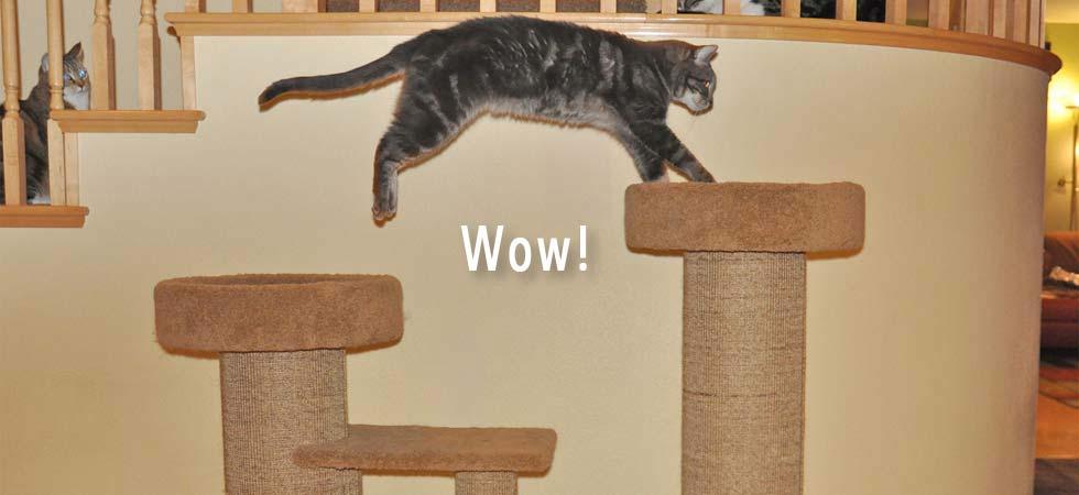 Purrfect Post Sisal Cat Scratching Posts Veterinarian