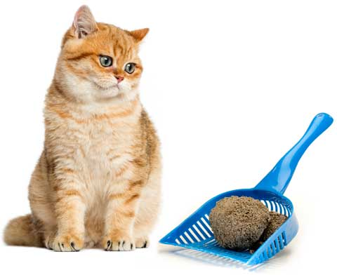 Cat Care and Training