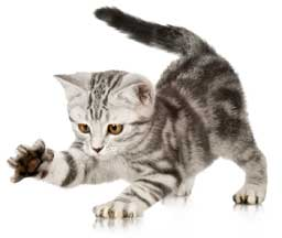 Check out our great articles all about cats and you.