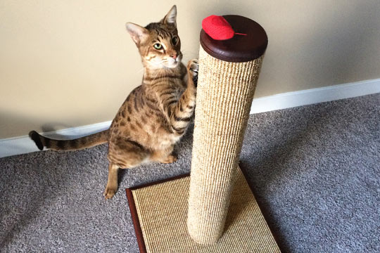 How To Choose The Best Cat Scratching Post Purrfectpost Com