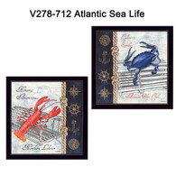 V278-712-Atlantic-Sea-Life