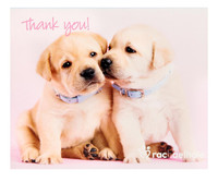 rachaelhale Glamour Dogs Thank-You Notes
