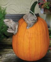 Rat Pumpkin Push-Ins