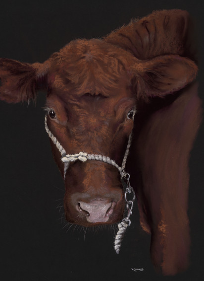 Lincoln Red Cow artwork by Kay Johns