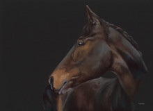 Bay Thouroughbred artwork by Kay Johns