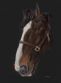 Shire horse artwork by Kay Johns