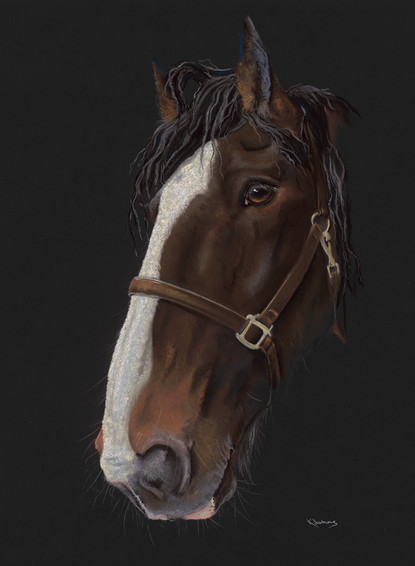 Shire horse artwork by Kay Johns