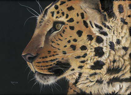 Amur leopard artwork by Kay Johns