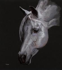 Grey Arab Stallion artwork by Kay Johns