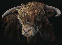 Highland Bull artwork by Kay Johns