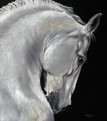Grey Arab Stallion artwork by Kay Johns