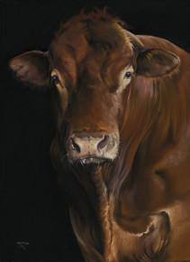 Limousin Bull artwork by Kay Johns