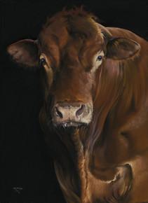 Limousin Bull artwork by Kay Johns