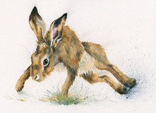 'Twister' hare by Kay Johns