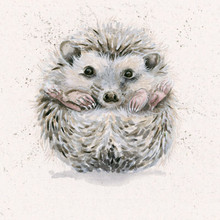 Hedgehog artwork by kay Johns