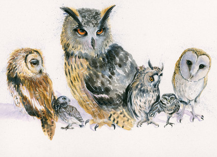 Various owls by Kay Johns