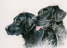 Labrador painting by Kay Johns