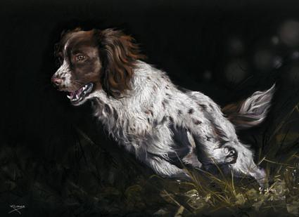 Springer Spaniel Artwork by Kay Johns