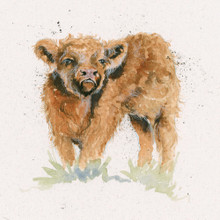 Highland calf artwork by Kay Johns