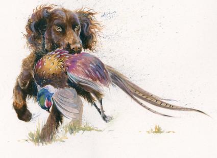 Working Cocker Spaniel artwork by Kay Johns