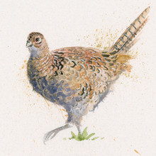 Female pheasant limited edition painting by Kay Johns