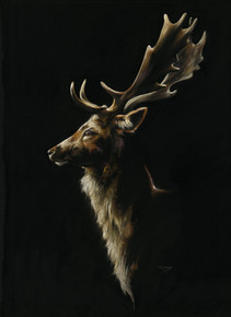 Fallow deer painting by Kay Johns