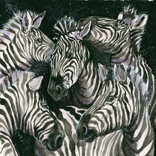 Zebra paintings by Kay Johns