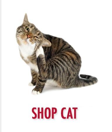 Cat Meds