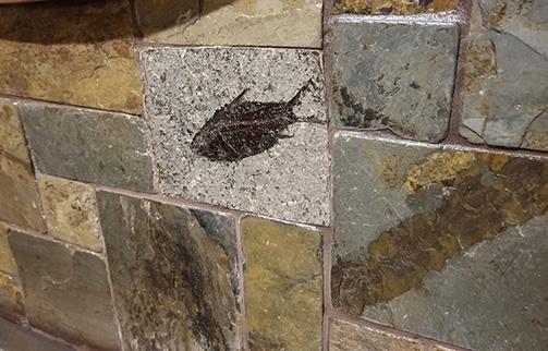 Backsplash Tile Idea