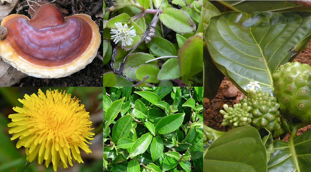 Phyto Antioxidant Herbs