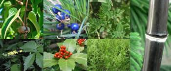 Blood Well Herbal Supplement Herbs