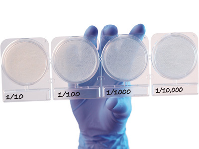 Compact Dry LS (Listeria spp) 100 trays per box by Hardy Diagnostics