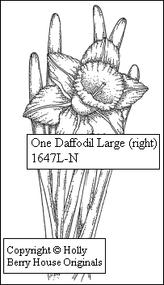 One Daffodil