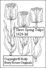 Three Spring Tulips