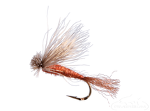 X Caddis, Brown