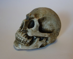 Halloween Skull Decoration or Costume Accessory