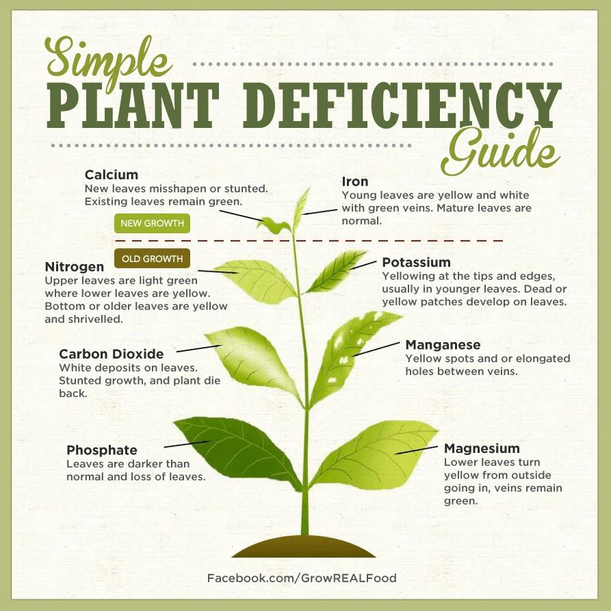 nutrient-chart.jpg